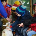 Early Years Trip to Stockley Farm