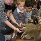Open Event - Meet the Animals