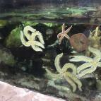 Year 1 & 4 Trip to Blue Planet Aquarium