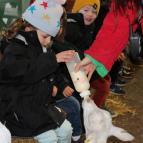 Santa at Stockley Farm