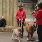 Christmas at Smithills Open Farm