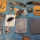 Year 3 Rock & Fossil Workshop