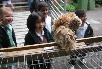 Early Years' Mobile Farm Visit
